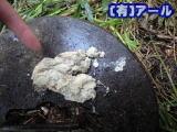 札幌市北区のお客様宅で排水管高圧洗浄した時の物