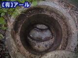 外の下水管が詰まっている札幌市手稲区のお客様